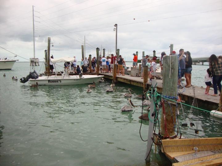 Robbies - Islamorada - alimentando peixes