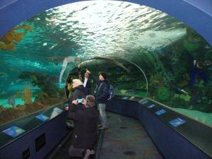 Ripleys Aquarium Toronto Canadá