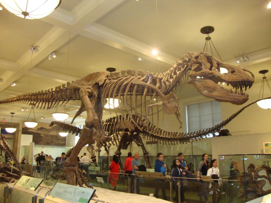 T-Rex - Museu de História Natural - New York