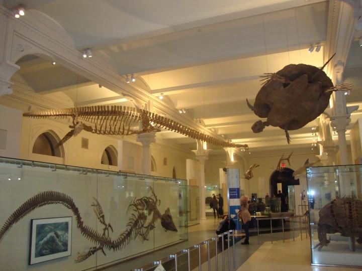 Museu de História Natural em Nova Iorque