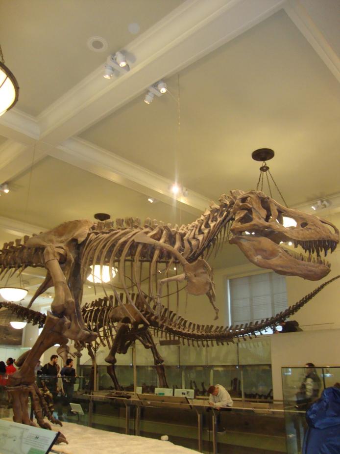 T-Rex - Museu de História Natural em Nova Iorque