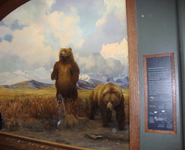 Seção Mamíferos - Museu de História Natural em Nova Iorque