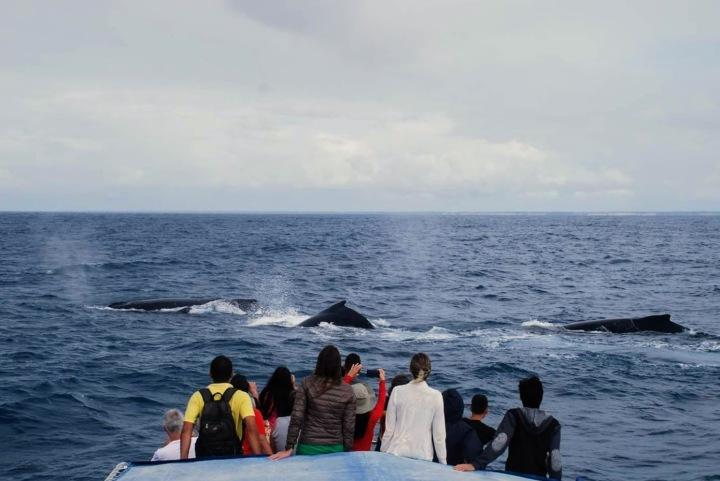 Turismo de observação - baleia jubarte em Arraial D'Ajuda