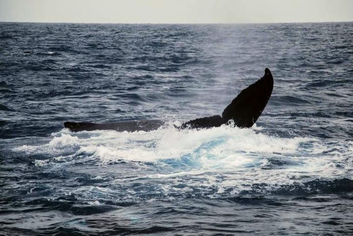 Baleia Jubarte em Arraial D'Ajuda