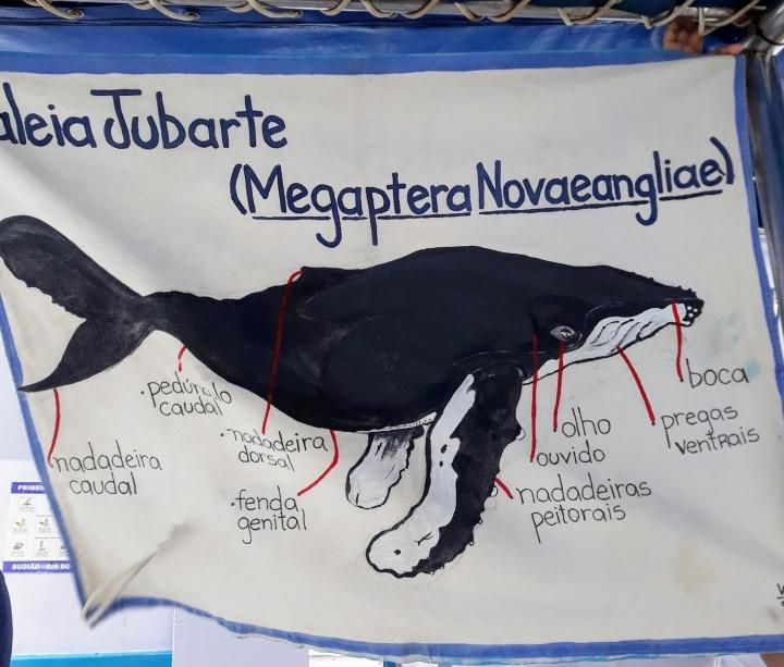 Baleia Jubarte - Passeio de barco em Arraial D'Ajuda