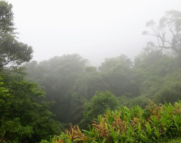 Neblina na Serra da Graciosa PR