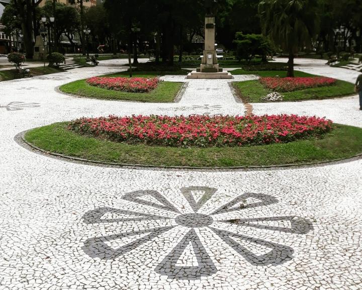 Curitiba e araucárias