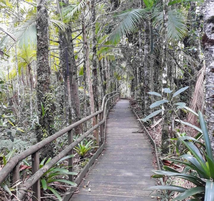 Trilha das bromélias no Parque Estadual Carlos Botelho em São Miguel Arcanjo SP
